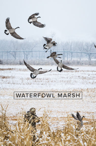 waterfowl_marsh