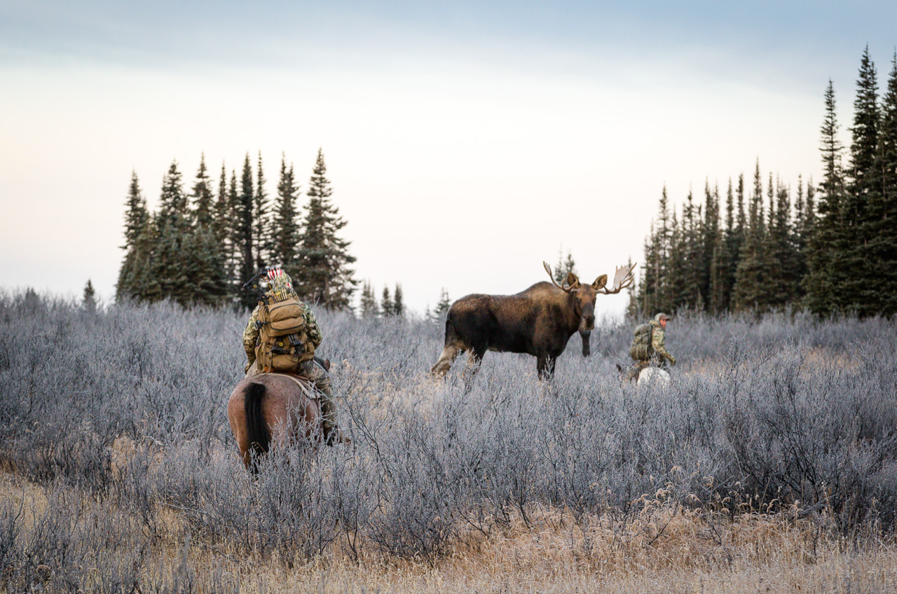 Hunters pass a moose on horseback.