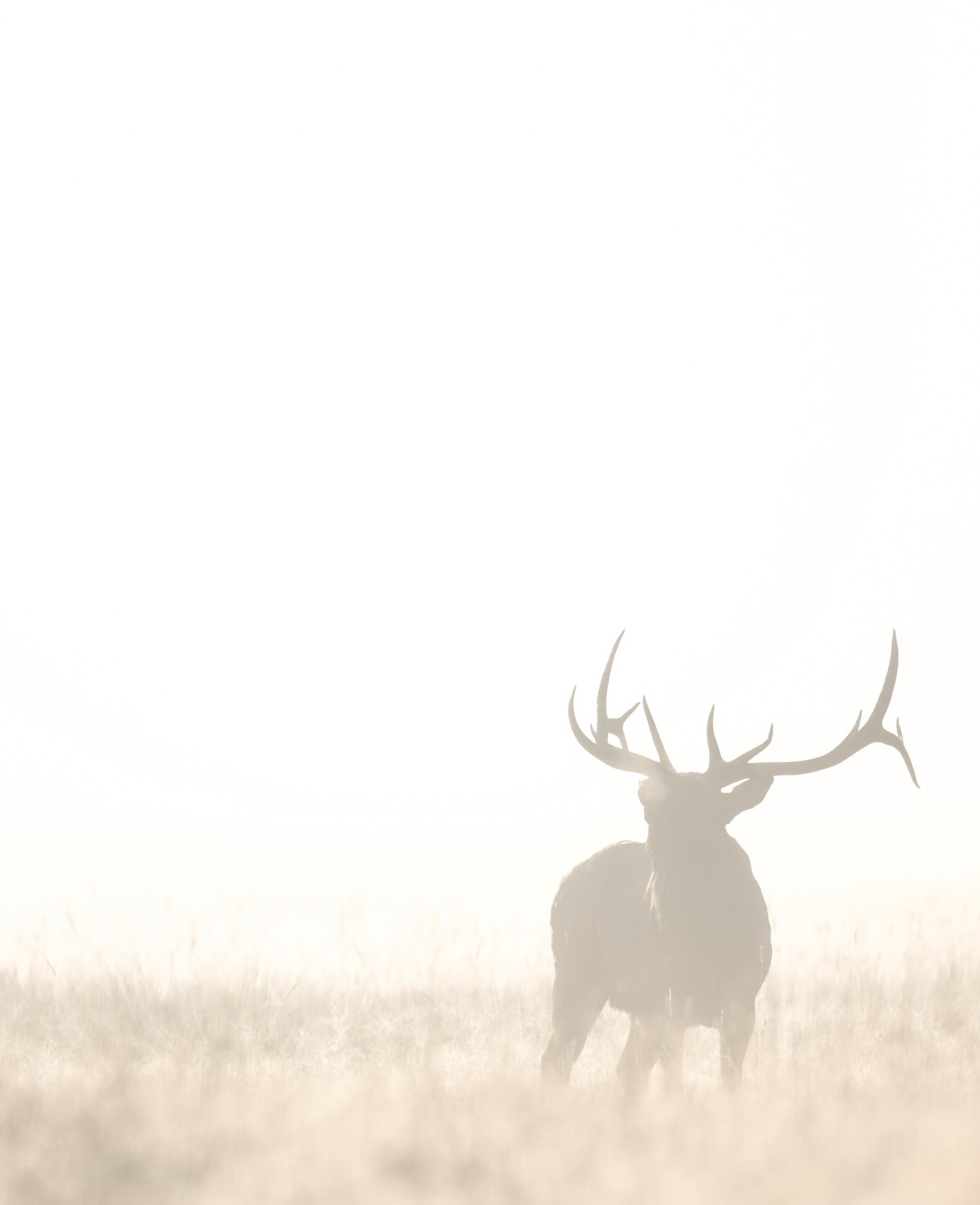 A bull elk in all its glory.
