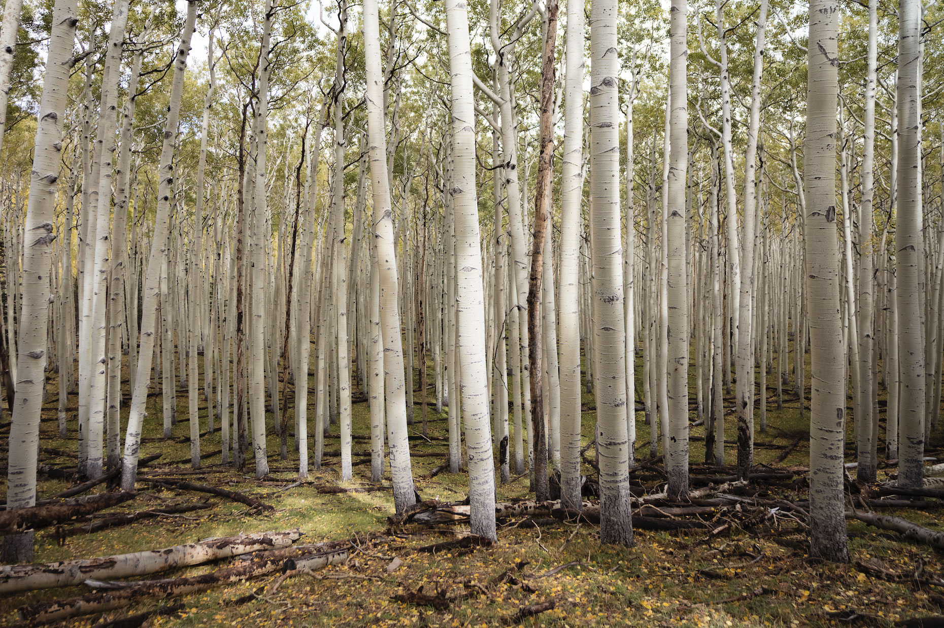 A pano forest image.