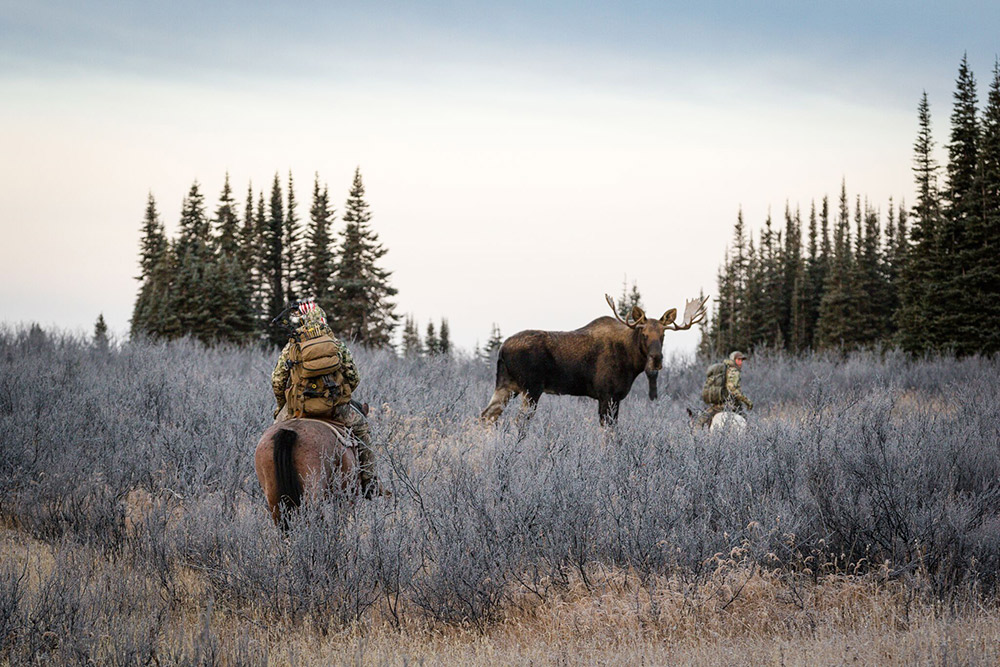 Hunters on horseback encounter a moose.
