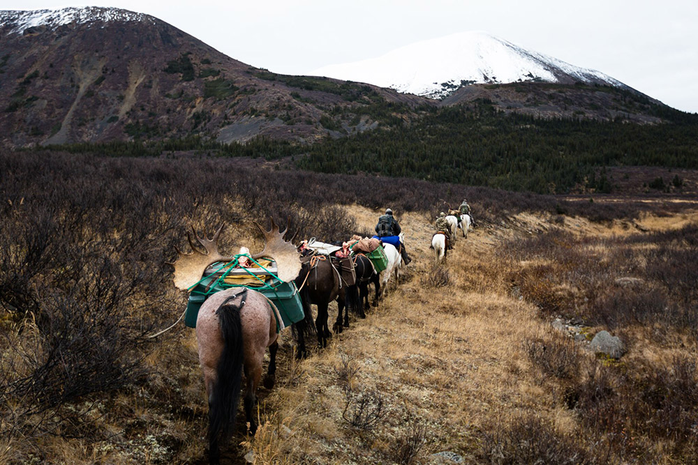 A long pack out via a trail of horses.