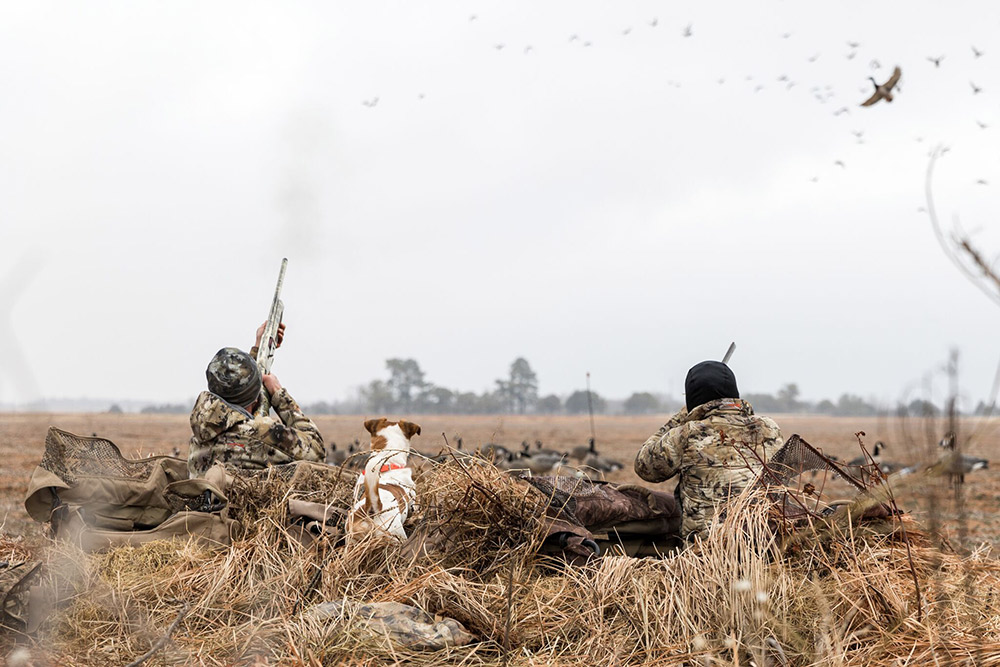 Gator the duck dog looks on as hunters shoot incoming birds.