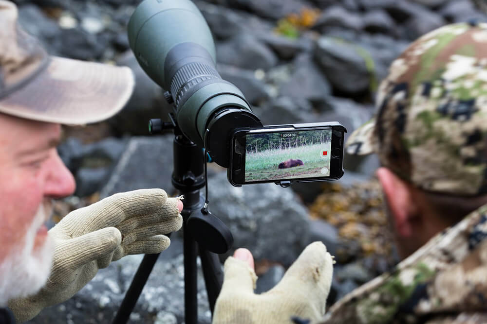 Recording a bear on an iPhone.