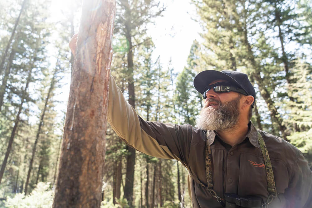 Looking for signs of elk in the wild