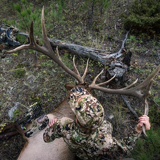 7 Tips For Archery Elk Success